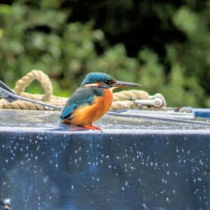 Bird Watching on the kennet and avon Canal