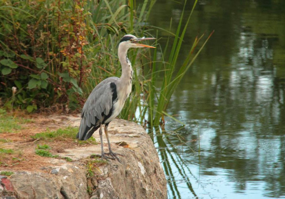 There is lots of wildlife to enjoy along the canal