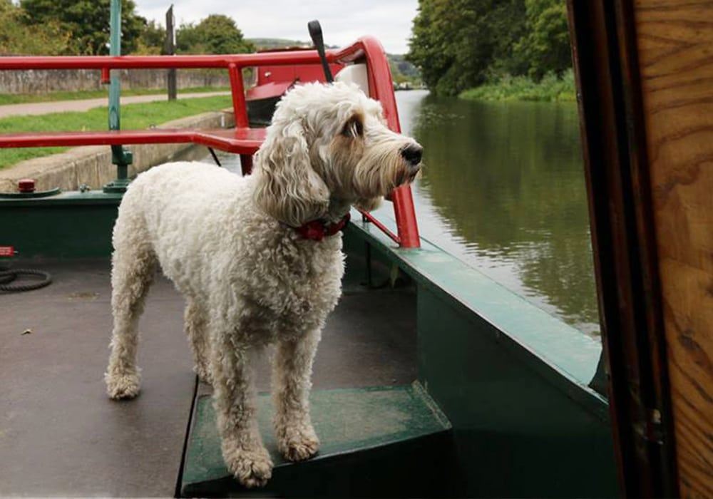 Dog Friendly Boating Holidays